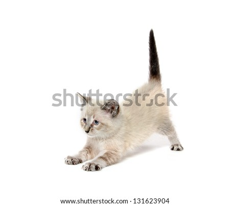 Cute baby tabby kitten playing on white background - stock photo