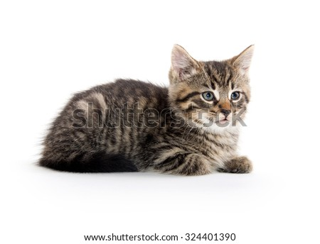 Cute baby tabby kitten resting and isolated on white background - stock photo
