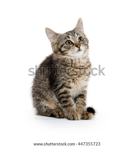 Cute baby tabby kitten sitting and isolated on white background