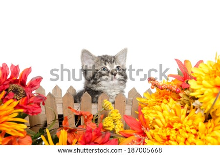 Cute baby tabby kitten sitting in flowers on white background