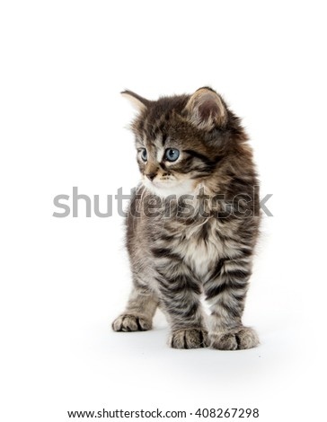 Cute baby tabby kitten sitting isolated on white background - stock photo