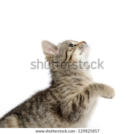 Cute baby tabby kitten with its paw in the air on white background