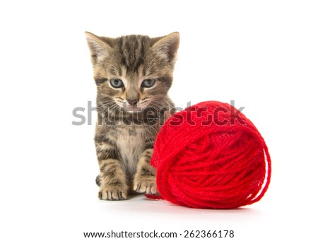 Cute baby tabby kitten with red yarn on white background - stock photo