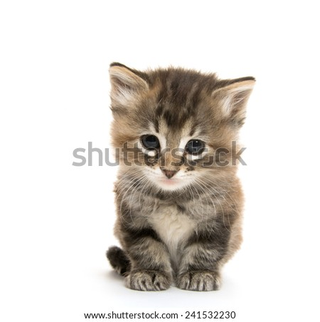 Cute baby tabby kitten with yellow stripe on white background