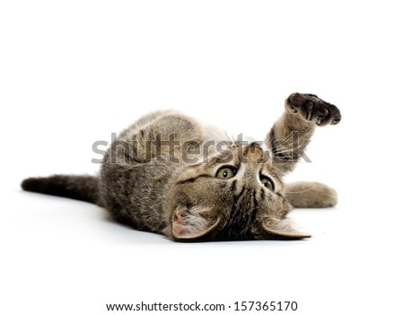 Cute baby tabby short hair kitten on its back and playing on white background