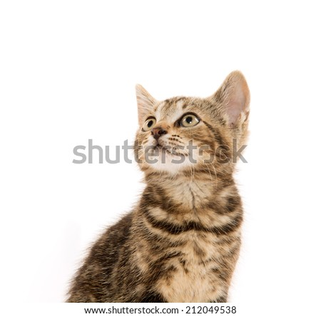 Cute baby tabby shorthair kitten on white background - stock photo