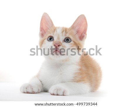 Cute baby yellow and white kitten on white background