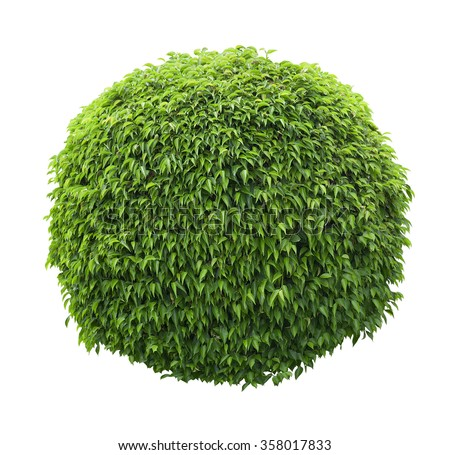Topiary Stock Images Royalty Free Images Amp Vectors Shutterstock