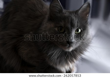 Cute beautiful grey cat indoors half in shadow.