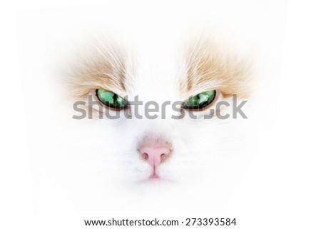 Cute beautiful kitten - stock photo