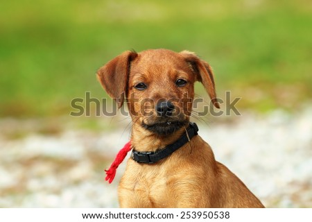 cute beige puppy portrait over green out of focus background, young dog - stock photo