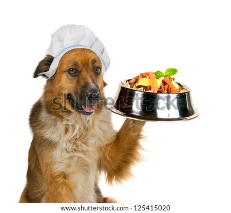 Cute big golden crossbred dog in a cap serving up a gourmet meal holding up a stainless steel dog dish balanced on its paw loaded with biscuits and tasty titbits isolated on white