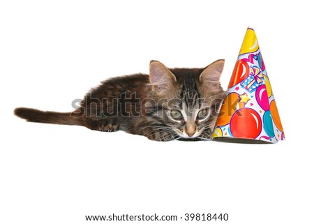 cute birthday kitten