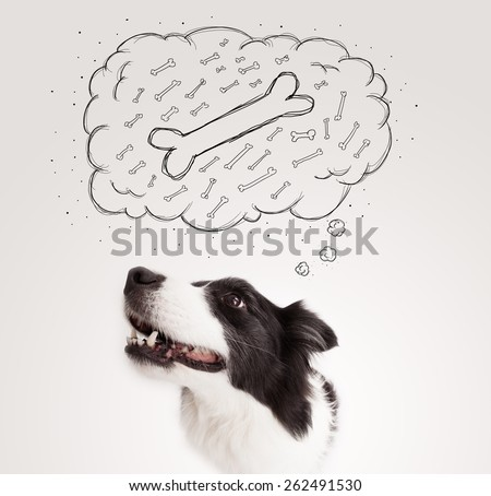 Cute black and white border collie sitting and dreaming about a bone in a thought bubble - stock photo