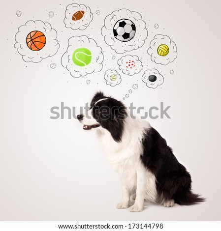 Cute black and white border collie thinking about balls in a thought bubbles above her head - stock photo