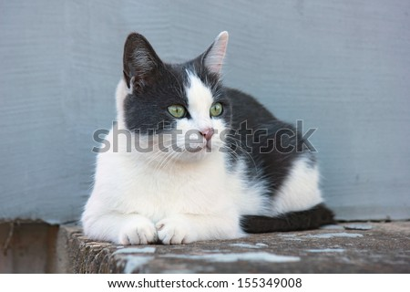 Cute black and white cat. - stock photo