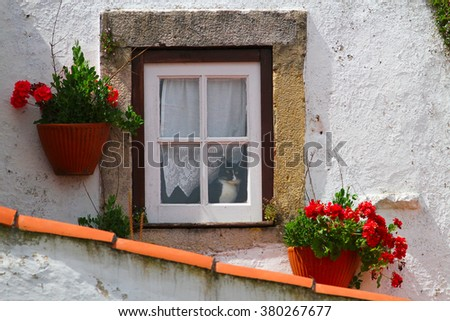 Cute black and white cat in the window full of flowers
