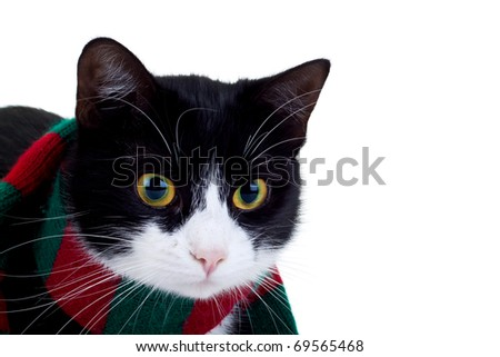 cute black and white cat wearing a christmas scarf