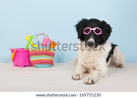Cute black and white dog is having vacation at the beach