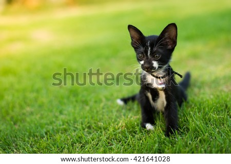 Cute black and white kitty cat sitting in the green grass. - stock photo