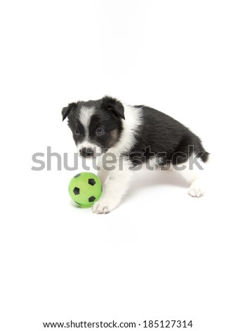 Cute Black and White Puppy with Green Soccer Ball on White Background