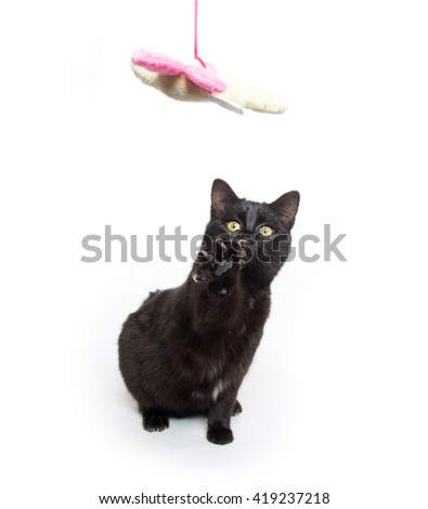 cute black baby kitten swinging its paw isolated on white background - stock photo