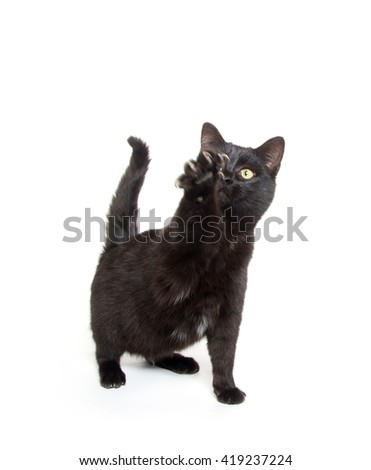 cute black baby kitten swinging its paw isolated on white background - stock photo