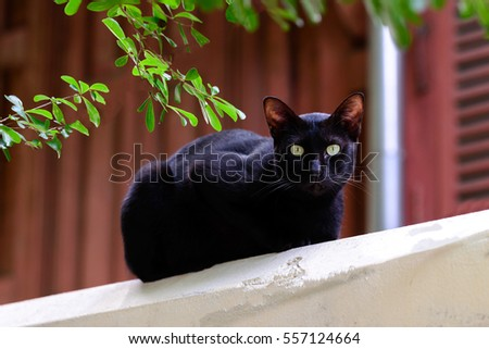 Cute black cat looking forward from top building.