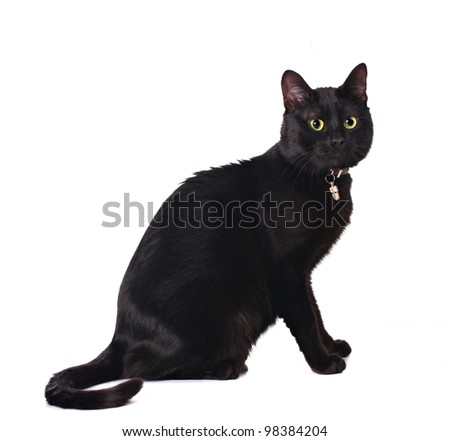 cute black cat sitting isolated on white - stock photo
