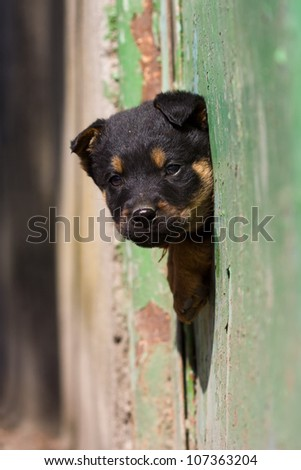 cute black dog and green fence - stock photo