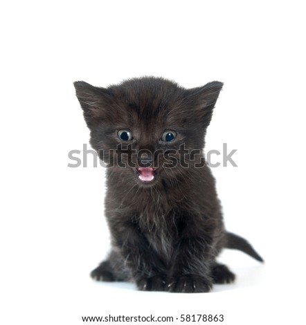 Cute black kitten crying while sitting on white background