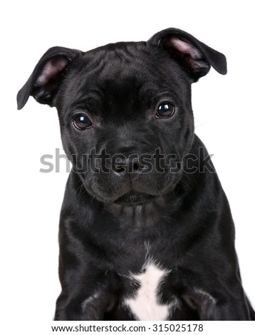 Cute black puppy portrait on a white background - stock photo