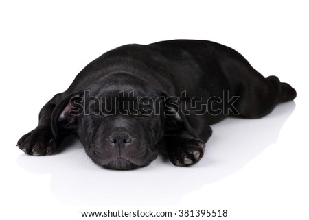 Cute black puppy sleeping lying on white background - stock photo