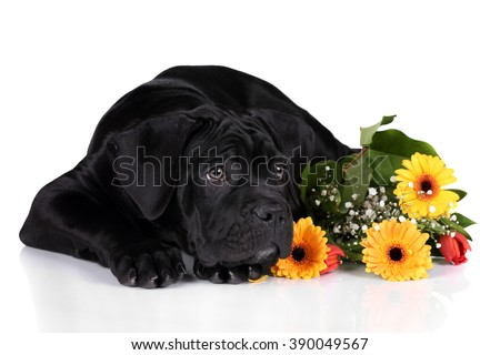 Cute black puppy with a bouquet of flowers on a white background