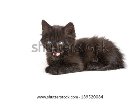 Cute black small kitten isolated on a white background