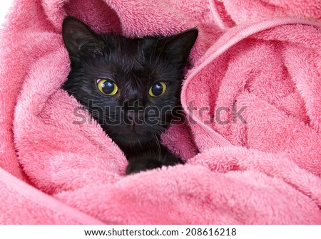 Cute black soggy cat after a bath, funny little demon - stock photo