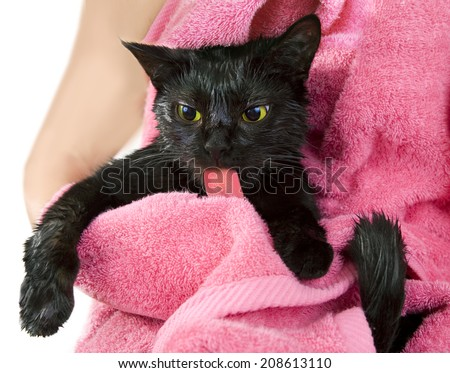 Cute black soggy cat after a bath licking, funny little demon - stock photo