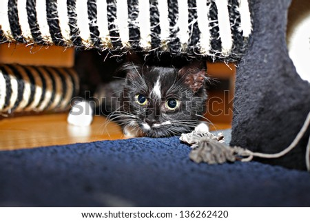 Cute black-white kitten playing with the tree house - stock photo
