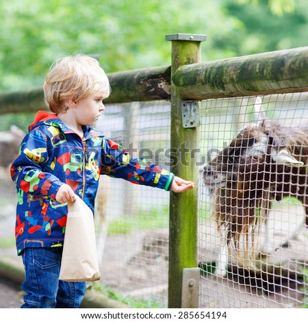 Cute blond kid boy feeding goats on an animal farm. Warm summer day. Active leisure with children outdoors.