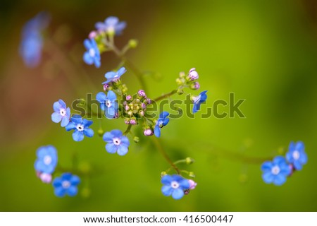 Cute blue flowers with bright green background
