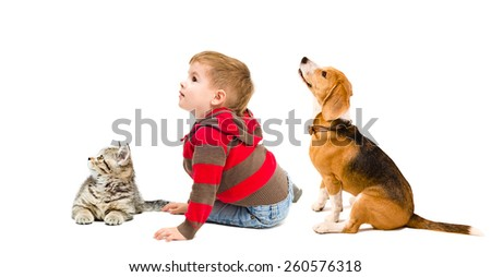 Cute boy, beagle dog and kitten scottish straight sitting together looking up, side view, isolated on white background - stock photo