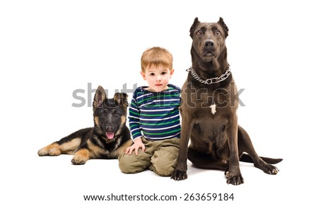 Cute boy sitting with a dog breed Staffordshire Terrier and German Shepherd puppy isolated on white background - stock photo