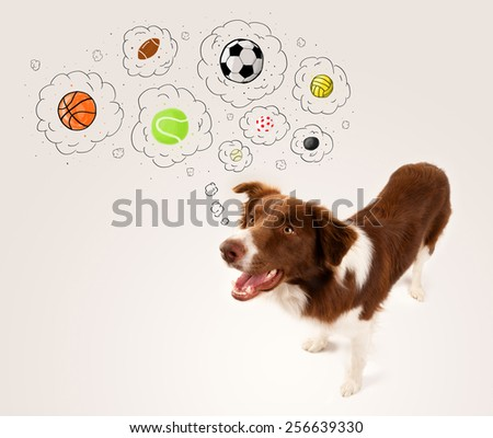 Cute brown and white border collie thinking about balls in a thought bubbles above his head - stock photo