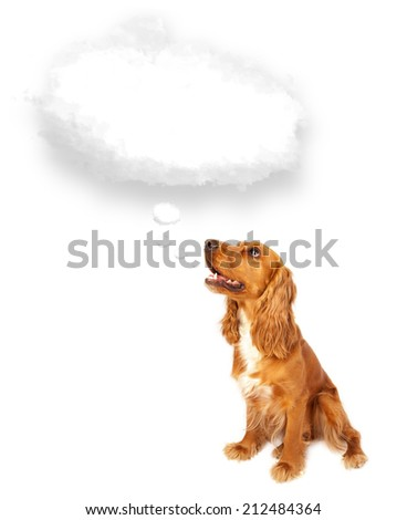 Cute brown cocker spaniel with empty cloud bubble above her head - stock photo