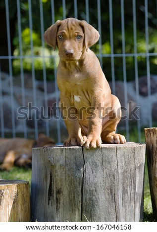 cute brown puppy sitting outside in garden on a wooden stem - stock photo