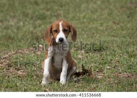 Cute brown puppy sweetly sitting in green grass.