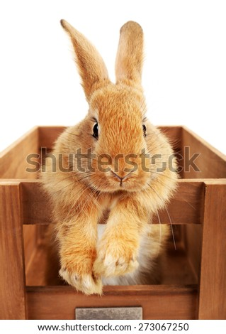 Cute brown rabbit in wooden crate isolated on white - stock photo