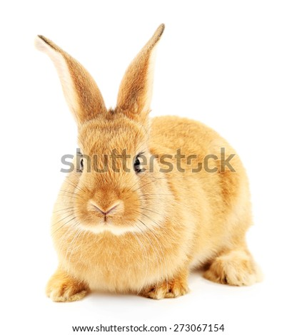 Cute brown rabbit isolated on white - stock photo