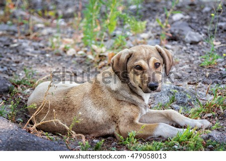 Cute brown stray dog laying on the ground outdoors