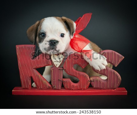 Cute Bulldog puppy leaning on a kiss me sign on a black background. - stock photo